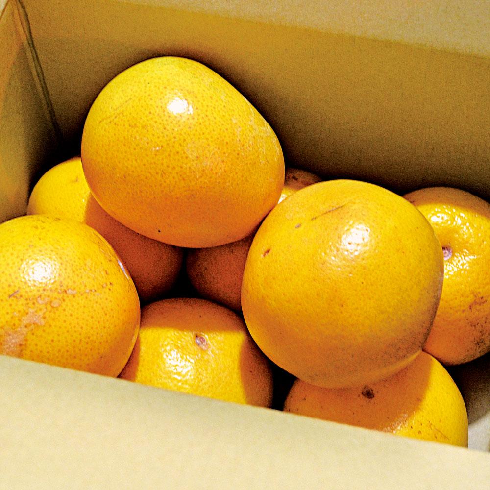 樹齢125年。奇跡のオーガニックレモンジャムとは?!